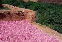 VALUES / Esscentual Alchemy natural botanical perfume values.