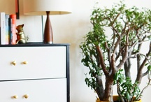 House Plants / Inspiration for my new pad