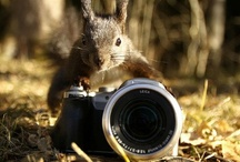 Animals and photography