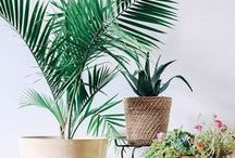 PLANTS - Indoor Plants & Garden Inspo / Indoor plant decor ideas and inspiration & Garden Design Ideas