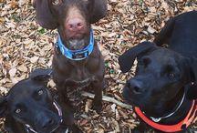 Kutyás kirándulások / Kedvenc helyeink, amiket a kutyákkal együtt fedeztünk fel!