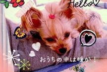 for DOG ❤︎ / #アロマ調香女子 #kanako.no41.jp #kanako_no41 #kanako #No.41