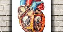 Anatomy art - Heart anatomy / Heart is one of the most fascinating parts of our body. We show the beauty of this vital organ through our anatomy art.