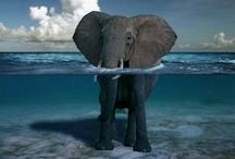 Elefanten / Ich liebe Elefanten.
