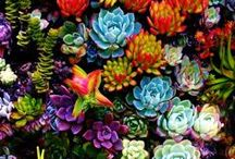 Succulents & Cacti / by Ramona Powell