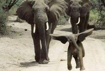 Elephants / by Ramona Powell