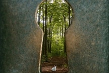 Down the Rabbit Hole / I'VE SWITCHED! Keep the inspiration going- join me over on my Flights of Delight blog Pinterest page here: http://www.pinterest.com/flightsdelight / by Stacy Sheckell