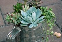 Succulents / by Kelly Backhus