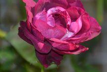 Flowers / Bloemen houden van jou!