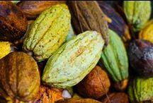 Cacao ♦ / Le Cacao est l'un des thèmes des Clusters de l'Exposition Universelle 2015 de Milan. C'est une épice présentée sous forme de poudre, obtenue après la fermentation puis la torréfaction des fèves du Cacaoyer.   Novoceram n'est ni partenaire, ni sponsor d'EXPO2015.
