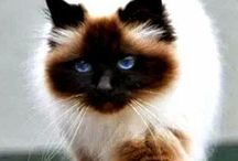 Chats / les chats