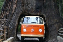 VW love / by Becky Dunnell