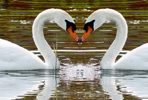 Feathered Love / by Tracey Miles