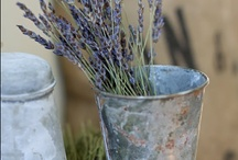 For the love of lavender...