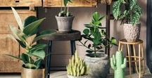 Indoor Plants and Flowers / Flowers & trees & plants, indoor plants inspiration, indoor plant syling, floral arrangement, flowers in vases, floristry inspiration