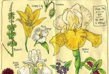 floriography & it / board of flowers and the language of it