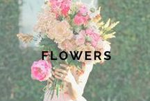 6+ MONTHS: Flowers / by Weddington Way