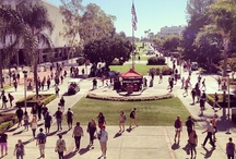 Scene at State / Our beautiful campus.