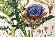 Botanical Prints & Drawings