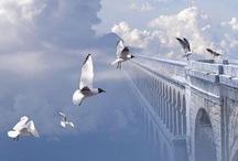 birdie birdie / Birds, oiseaux, uccelli, pájaros