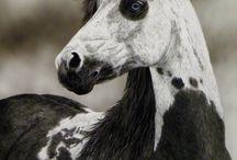 Horses / by Kinsey Carrasco
