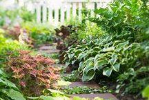 Garden / by Brittany Murchison