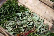 Wild Weeds + Foraging [Botanical] / Interested in learning about foraging wild weeds and using them? This board shares tips on how to forage and harvest herbs, how to preserve them and put them to use, preparations made with wildcrafted herbs, and more.