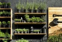 Container Gardening [Live Well] / Container gardening is quite popular. Learn how to grow herbs easily in containers with these helpful pins!
