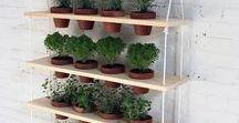 Tuinier Overzicht / Wat is er allemaal te doen in de tuin? Hoe zorg je voor verschillende planten? Tuinieren is heel leuk, maar je moet wel weten wat je aan het doen bent! Vrees niet! Wij helpen je met alle informatie die je nodig hebt.