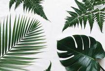 Planten producten Overzicht / Planten vergelijken en kopen doet u het gemakkelijkst online, via onze website TuincentrumOverzicht.nl. Wilt u graag tuinplanten aanschaffen voor gegarandeerd lage prijzen?  Op onze website vindt u een variatie aan planten zoals; vaste planten, kamerplanten, haagplanten, klimplanten, fruitplanten, perkplanten, kruidenplanten en vijver- en waterplanten. Wij hebben vele duizenden producten in het assortiment opgenomen.