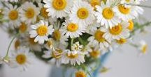 Flowers / Flowers, colors ☼
