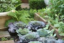 Urban Farming & Gardening / Farming and Gardening