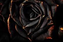 Roses / by Revel