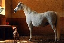 Horses / by Revel