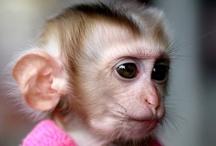 Primates / by Revel