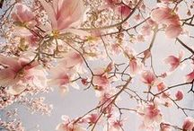 Spring / Spring, Spring Photography, Styling, Spring Styling, Spring colours, Spring Inspiration, Styling Inspiration