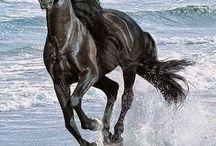 Magnificent and valorous horses