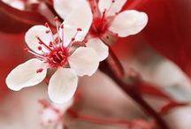 Quatre Saisons - Printemps - Spring