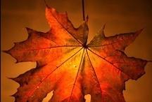 Quatre Saisons - Automne - Autumn -