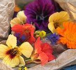 ZELF KWEKEN | bloemen / Alles over bloemen in en voor de moestuin
