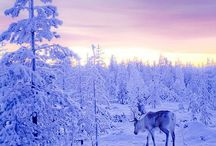 Finland / The best of Finland, from Helsinki to Tampere, from Turku to Lapland, from Naantali to Kemi...