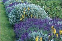 Garden/Yard / by Patty Munro