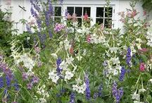 Gardening :: Cottage Gardens / Bits and pieces that make cottage gardens so enchanting...