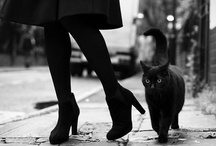 Black Cats / by Karla Arroyo