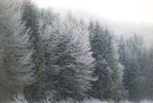 "Seasons - winter / ""Winter is not a season, it's an occupation.""  ― Sinclair Lewis"