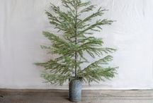 Seasons - oh christmas tree / For the love of the christmas tree / by Lou Archell | littlegreenshed