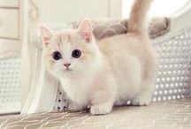 les chat trop chou ses chou / trop mignon