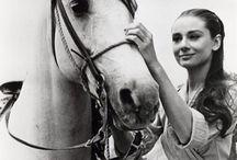 ♡Horses♡ / horses leave hoofprints on your heart