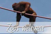 Zoos weltweit / Auf unseren Reise steht für mich fast immer auch ein Besuch in den Zoo fest auf dem Programm, hierfür plane ich immer einen ganzen Tag ein. Ich liebe exotische, seltene und süße Tiere und könnte stundenlang mit der Kamera in der Hand dem Treiben folgen. Auf meinem Blog stelle ich euch immer wieder Zoos aus aller Welt vor und verrate euch einige Tipps und präsentiere meine schönsten Fotos. Der nächste Trip in den Zoo ist schon in Planung.