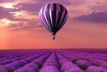 Purple we love